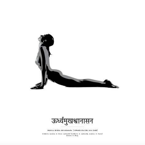 Poster 50x50 - Urdhva Mukha Shvanasana.p