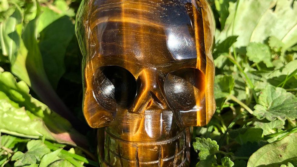 Tiger's Eye Skull (A144)