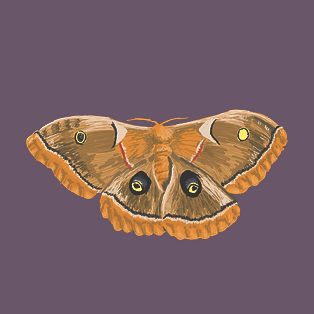 Moth_day1.jpg