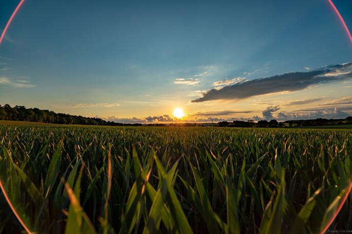 Sunset sur les champs