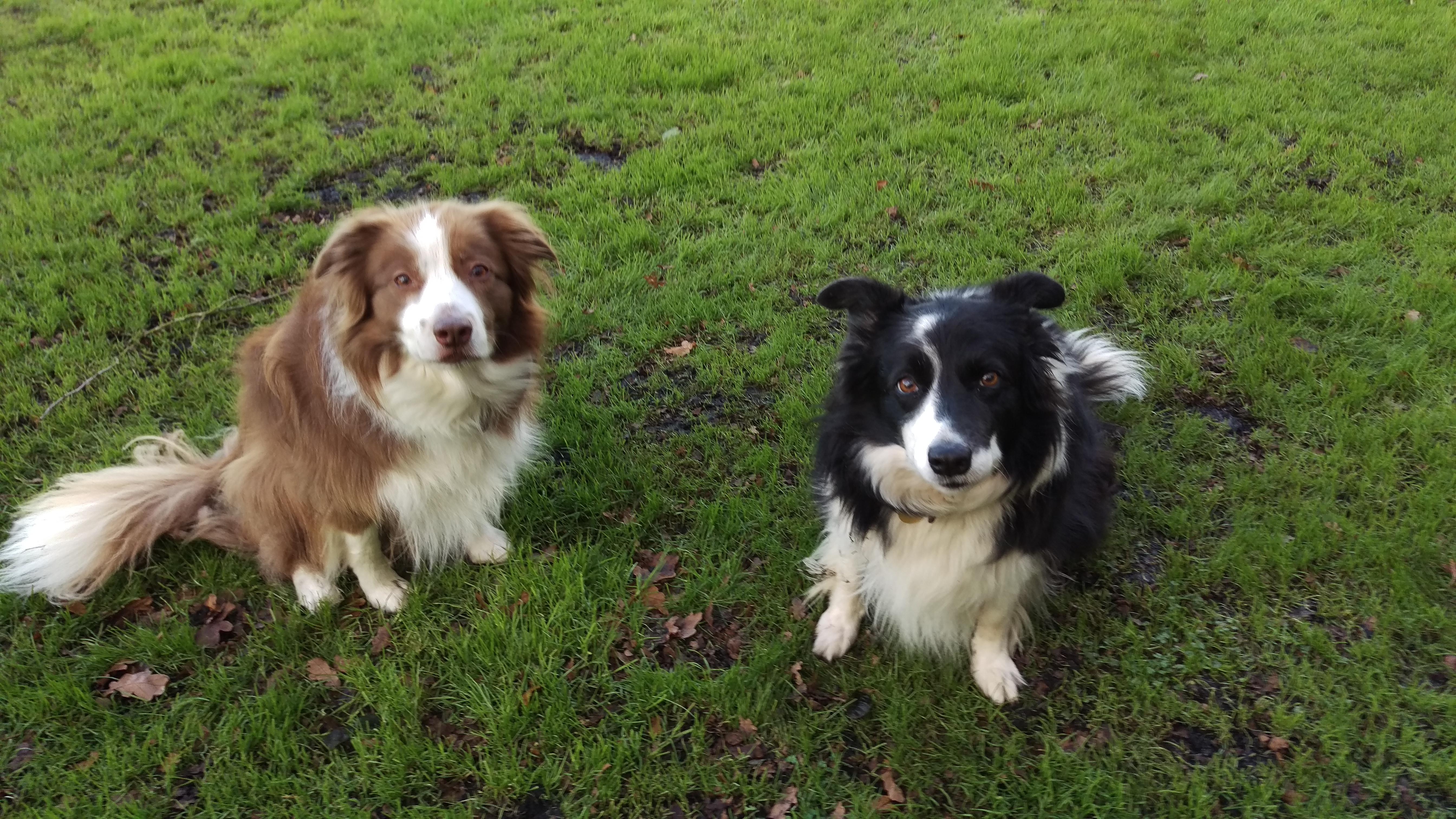 Cloverleigh Dog Boarding Kennels Dog Training Ely England