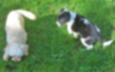 Safe Puppy Training Paddock