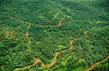 oil-palm-plantation-aerial-view-of-former-rainfore-JDBVHQA.jpg