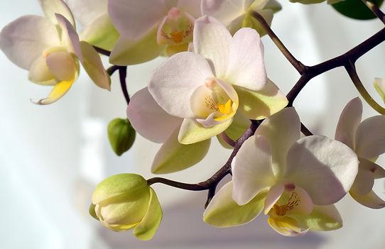 orchid-2181044_1920.jpg