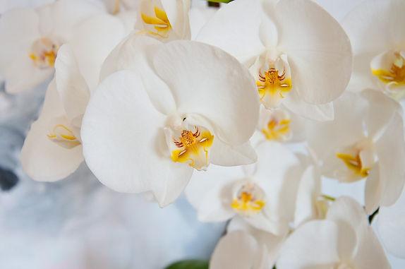 orchid-3992392_1920.jpg