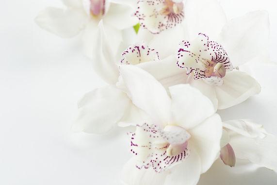 orchids-1209612_1920.jpg