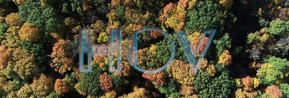 Tree Tops Fall
