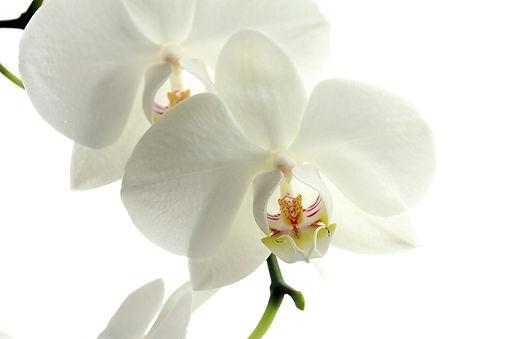 flower-179004_1920.jpg