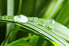 water drops on the green grass.jpg