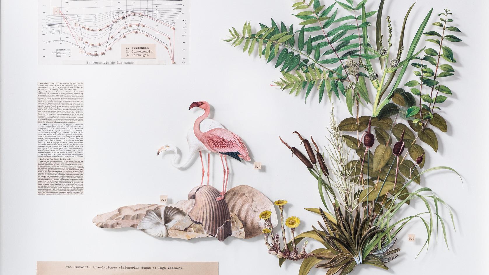 Von Humboldt: Apreciaciones visionarias desde el Lago Valencia
