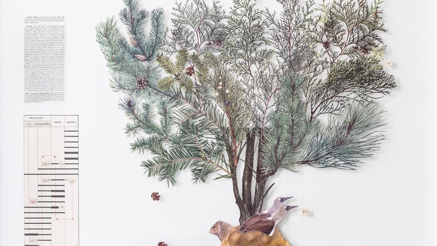Darwin, Las Galápagos y el origen selectivo del árbol de la vida