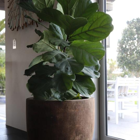 Coconut Pot
