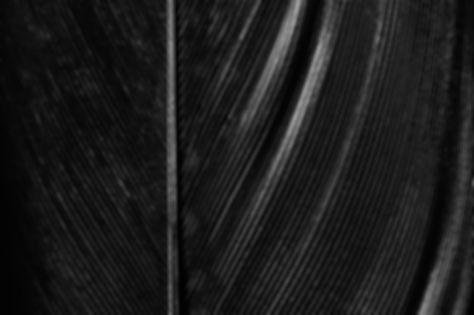 Blackbird Washington DC