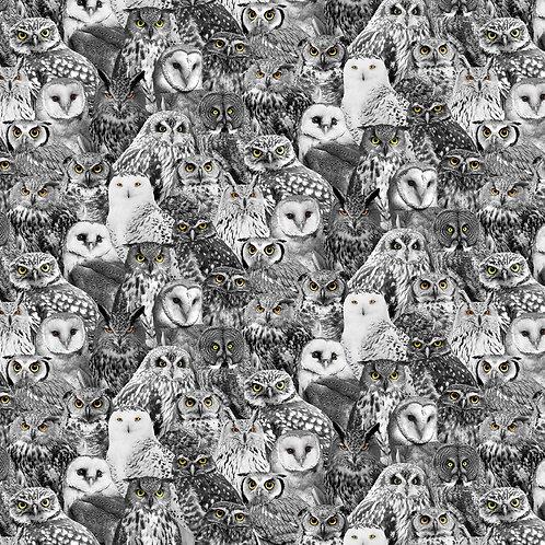 Wicked Fog Black Owls fabric