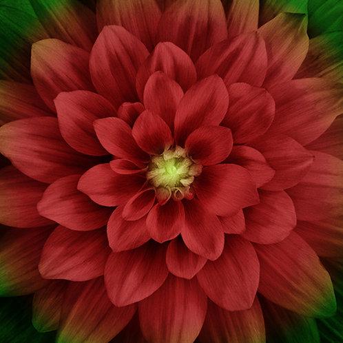Scarlet Dream Big Flower Panel