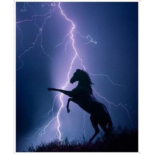 Horse Panel - Midnight
