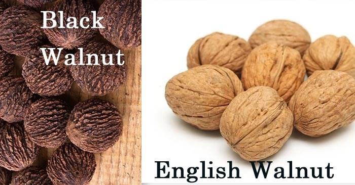 midwest modern moment black walnut nocino