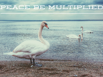 Peace Be Multiplied