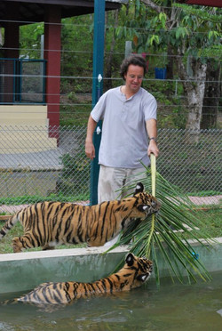 A 'tiger' with two real tigers . . .