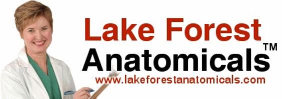 lake_forest.jpg
