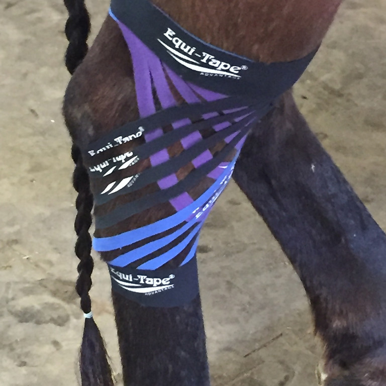 Introduction to Kinesiology Taping (Canine and Equine)