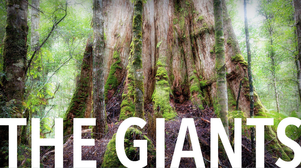 THE GIANTS | A Cinematic portrait of Bob Brown, the Forest, and our profound connection with trees.