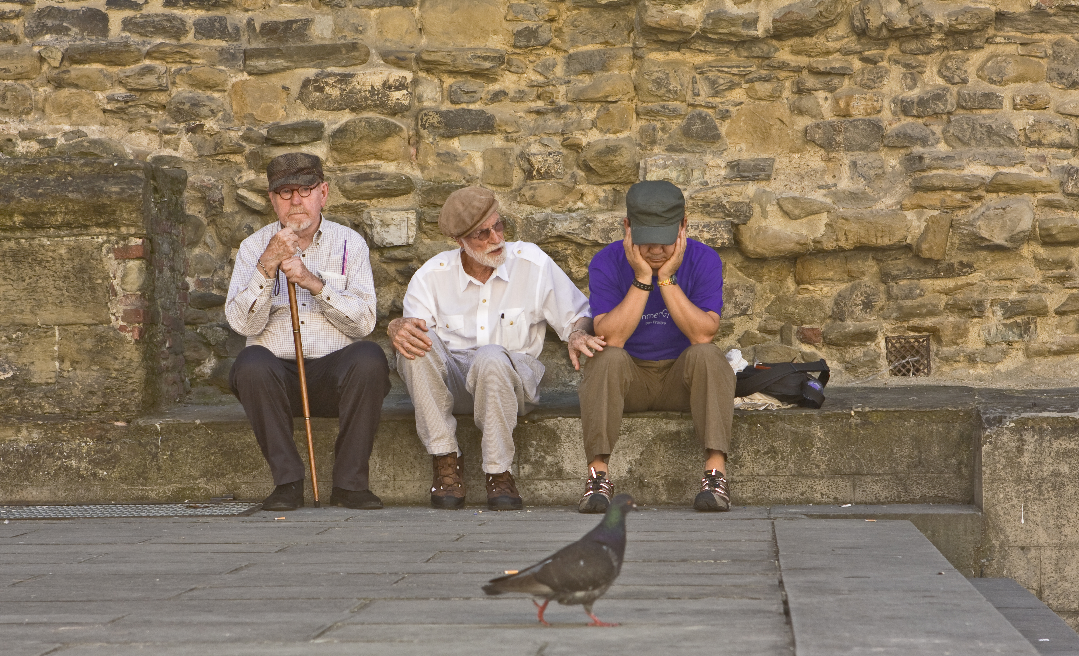 psd with pigeon IMG_5645.jpg