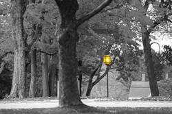 light 430A4997.jpg
