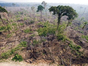 The lingering threat of future pandemics from deforestation
