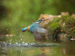World Rewilding Day