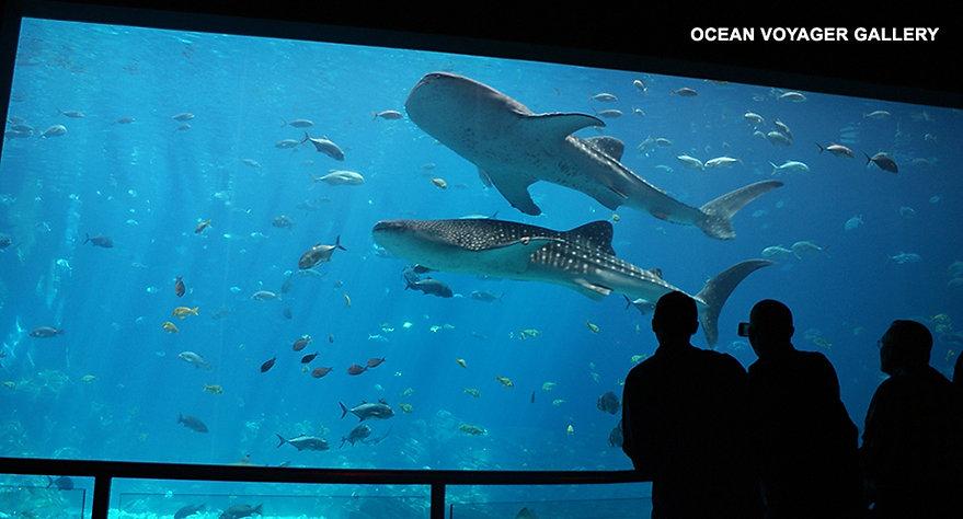 Ocean Voyager exhibit at Georgia Aquarium in Atlanta, Georgia.