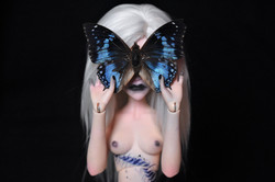 Nyx Butterfly