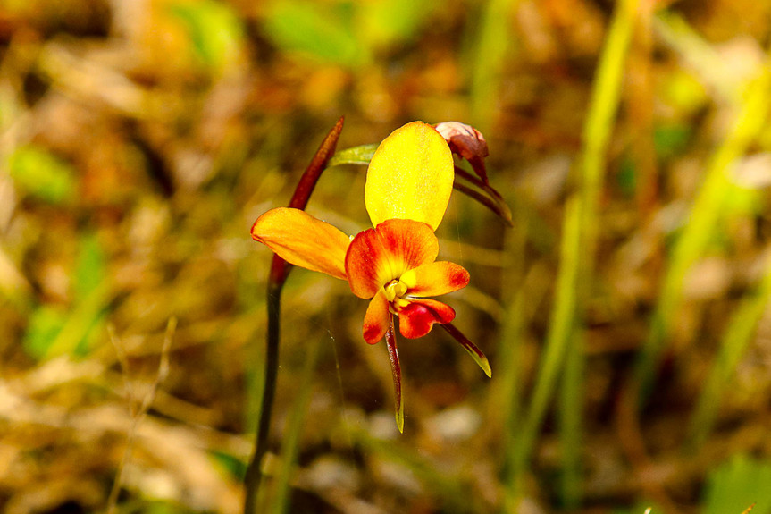 Pemberton Discovery Tours is Ready for Wildflower Season