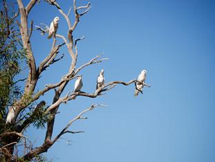 Birdsvile_Birds.jpg