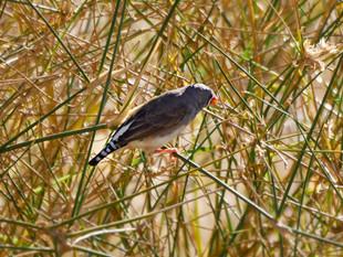 Birdsville-BirdWatching_web.jpg