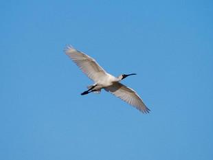 TTD_Birdsville-Bird_web.jpg