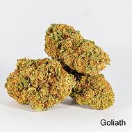 Goliath Flower.jpeg
