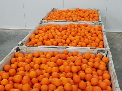 Oranges in bins 2016-09-14 12.53.14.jpg
