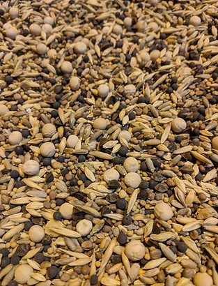 Cover Crop Seed Picture.PNG