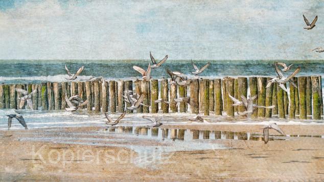 Tauben und Buhnen, Panorama.jpg