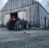 barn with jeb.jpeg