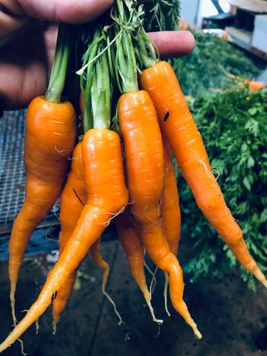 carrots 2.jpeg