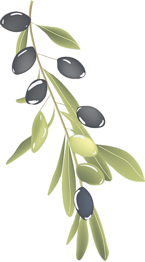 Vector Hand Painted Olive Branch, Vector