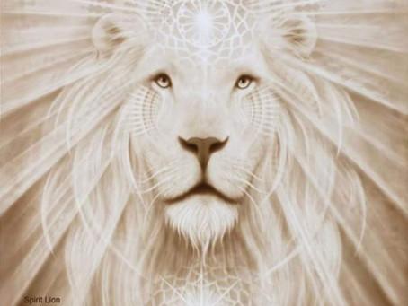 Löwen und Tiger