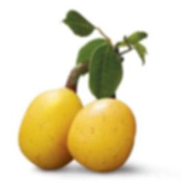 Strebor Organics