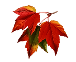 autumn-leaves-watercolor-painting.png