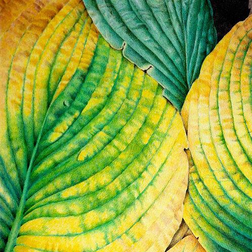 Hosta Leaves I