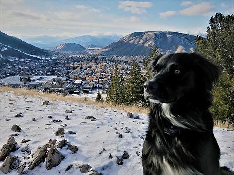 final dog photo.jpg