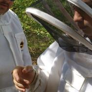 bees8.jpg
