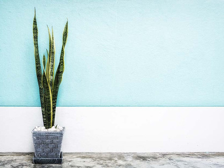 6 Indoor Plants That Will Spice Up Your Living Space